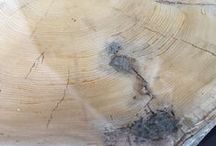 LOGS / Nice logs - natural, painted, wood, concrete