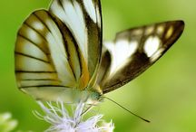 Nature: Butterflies are Magic