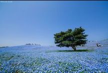 Japan - Ibaraki (Kanto)