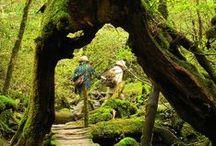 Japan - Kagoshima (Kyushu)