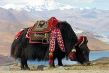 Country: Tibet