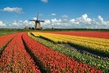 The Netherlands: Cute Country
