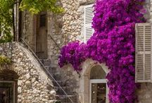 Provence... / by Annie K.