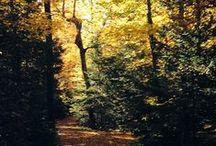 All Things Fall / Fall foliage, seasonal activities, and more
