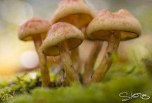 Mushrooms / by Vivet Desabah