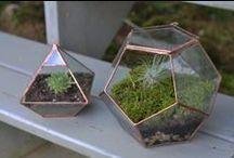 Outdoor - Terrariums