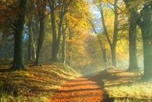 All the colours of Autumn