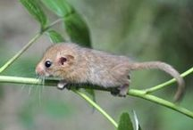Wildlife / Wildlife news from Berkshire and Buckinghamshire
