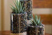 - Succulents & friends -