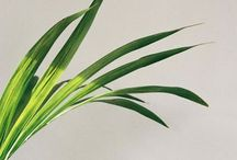 TREND ALLERT: palms print