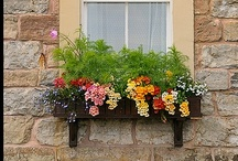 Window Boxes & Colorful Flowers / We recruited various boards on a ** Window Boxes & Colorful Flowers** !! everyone smile!!and Happy Pinnig!! The as possible same photo please do not do pin!! Please stop it with a pin in it, and, please do only an appropriate photograph on a theme! In inappropriate pin, we delete it. And I am sorry! Please invite your friend from Edit Board of this board! And I will increase members in everybodies.   Happy Pinning& SMILE!! / by PEARL ONION