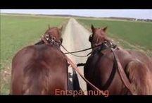 Kaltblutpferde Draft horses / Entschleunigung, Ruhe und Gelassenheit