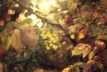 Jesień/ Autumn