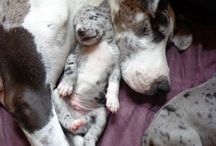GUAUS / Perros