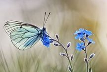 Natura/Naturaleza/Nature / La Belleza de la Naturaleza /The Beauty of Nature