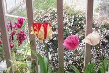 MY FLOWERS / Τα λουλούδια μου