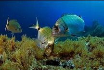 ❈ Underwater Life ❈