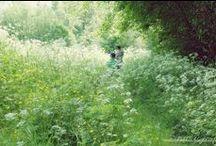 metsäkukkia. -blogi / Pics from my blog :) #nature #lifestyle #running #wellness #gardening