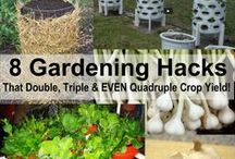 "Gardening-Tips and tricks / Gardening know-hows / by Lillian ""honey badger"" Chen"