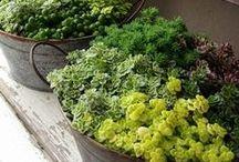 Zahrada a vše kolem / rostlinky, keře, ale i zahradní nábytek