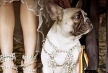 TheClassy Dog