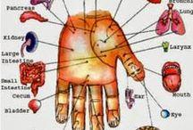 Behandlungszonen DENAS / Die Behandlung mit den DENAS-Geräten erfolgt an den Orten der direkten Projektion der Beschwerden, aber auch an zugehörigen Segmentzonen und Punkten allgemeiner Wirkung