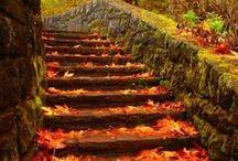 ❦ Autumn ❦