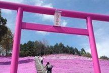 torii / japońskie bramy torii | Japanese torii gates | Japonia | Japan