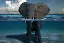 elephants / .
