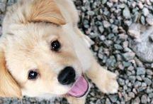 A N I M A L S / Pets make so laugh
