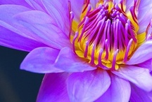 Bloom / Just gorgeous flowers - notice how they all look so good together, no matter the color or type!