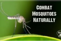 PEST CONTROL / Natural ways to rid home and garden of pests, insects, rodents, deer, etc / by Rebecca Brazell-Woodall