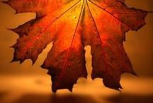 Ode to Autumn / Fall is the most wonderful season EVER, so here is my loving tribute to its cozy crispness and beauty.