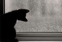 Black Cats of my heart! <3<3<3