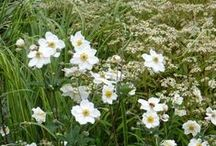 planting whites - beplanting wit - / Goede witte combinaties -  white combinations borders