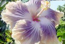 flowers & plants / bloemen planten