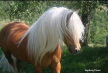 horses & ponys / paarden en pony's