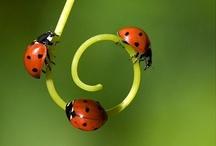 Nature Closeups