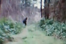 Bigfoot Evidence & Sightings