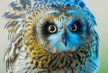 My Soul...Is Owl