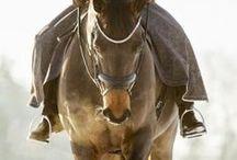 Horses / by Deborah Boyd-Moss