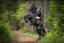 Konie / Zdjęcia, grafiki, rzeźby, itp. przedstawiające koni, które są dla mnie inspiracją.