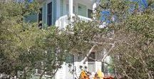 Greenback - Seaside, FL / 1BR, 1.5 BA The guest house to Greenpeace, this absolutely adorable  beach cottage is in the heart of Seaside. Great view of the Gulf of Mexico and just steps to Seaside town center. This charming cottage is a favorite with couples and small families.