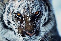 Animalistic Majesty