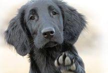 dogs / honden