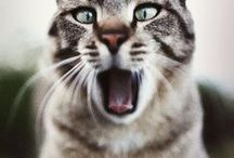 cats / katten