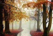 Forgive me, Autumn