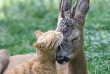 Animals - Friends