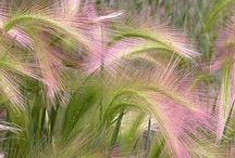 Grasses / Herbes folles... Je raffole !!