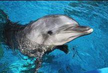 Animals - Seaworld